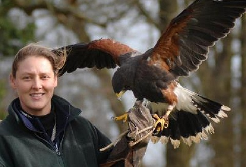 Link to the Arden Falconry website
