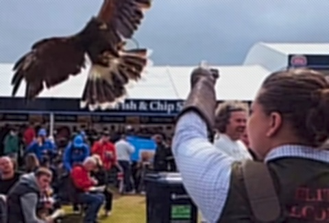 Link to the Elite Falconry website