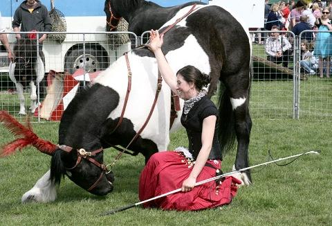 Link to the Olivants Equine Displays website