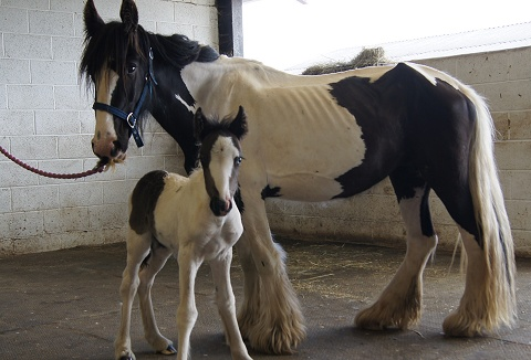 Link to the HorseWorld Trust website