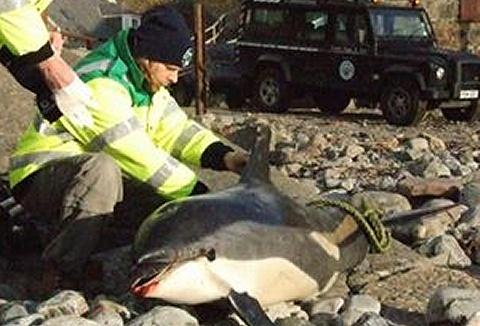 Link to the Cetacean Research & Rescue Unit website