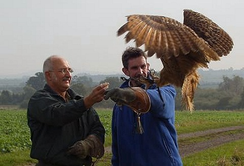 Link to the J.R.C.S. Falconry website