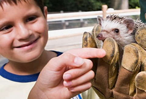 Link to the The Animal Man website