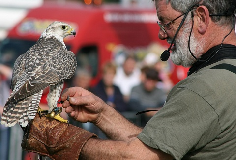 Link to the Falconry Days website