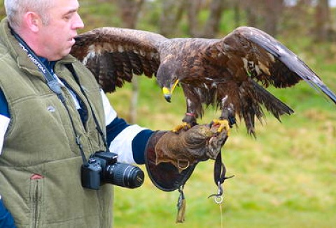 Link to the Ancient Art Falconry website