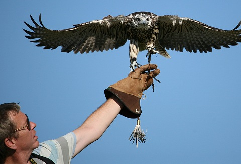 Link to the The Falconry School website