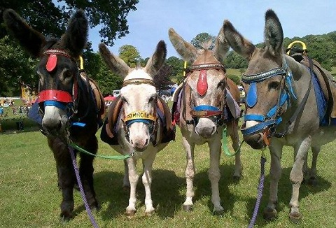 Link to the Stonehill Donkeys website