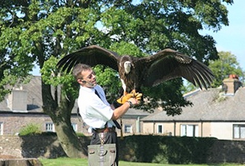 Link to the Silverband Falconry website